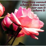 true love quote